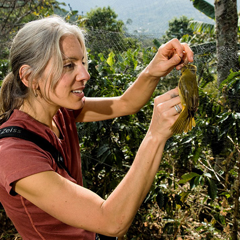 Amanda Rodewald banding a bird in Colombia